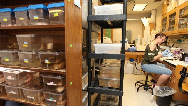 Sarah McIntyre '20 sits in a science lab